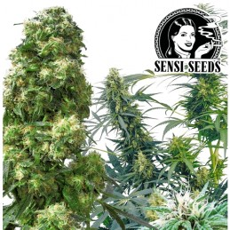 Konopné semená Sensi Seeds: Outdoor Mix (25 semien)
