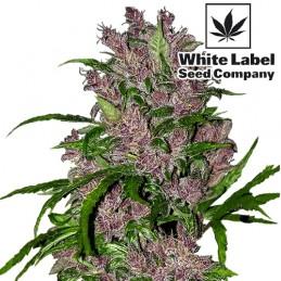 WL - Purple Bud automatic femini (5 semienok)