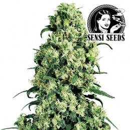 Skunk no. 1 Feminized (3 semienka) - Konopné semená Sensi Seeds